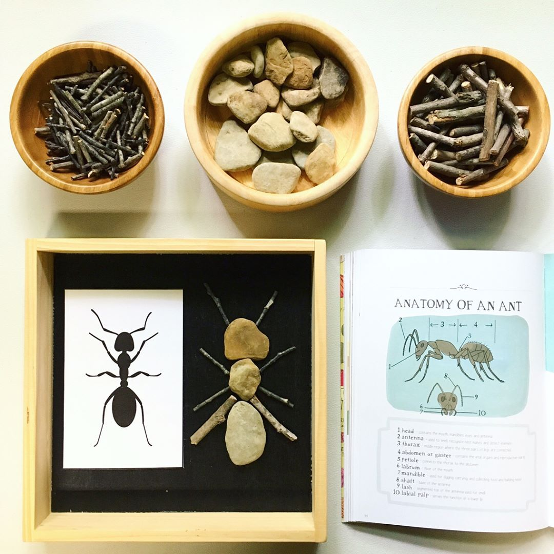Anatomy Of An Ant Using Our Rock Amp Stick Loose Parts I