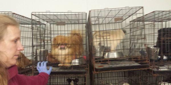 HELP ANIMAL WELFARE ACTIVISTS IN ILLINOIS SHUT THIS HELL