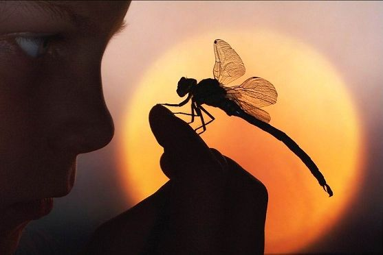 dragonflies pictures - Bing Images