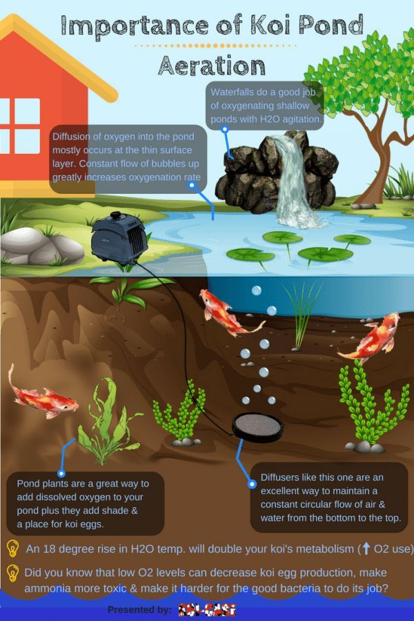 Pond Aerators: Why They're so Important to Koi & How to Do It Right ~ Importance of Koi pond Aeration