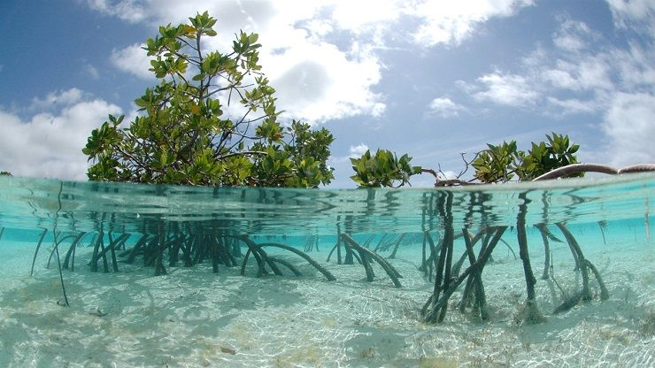 A new study carried out by UNEP highlights the ongoing destruction of mangrove forests, whose disappearance costs 42 billion dollars per year.