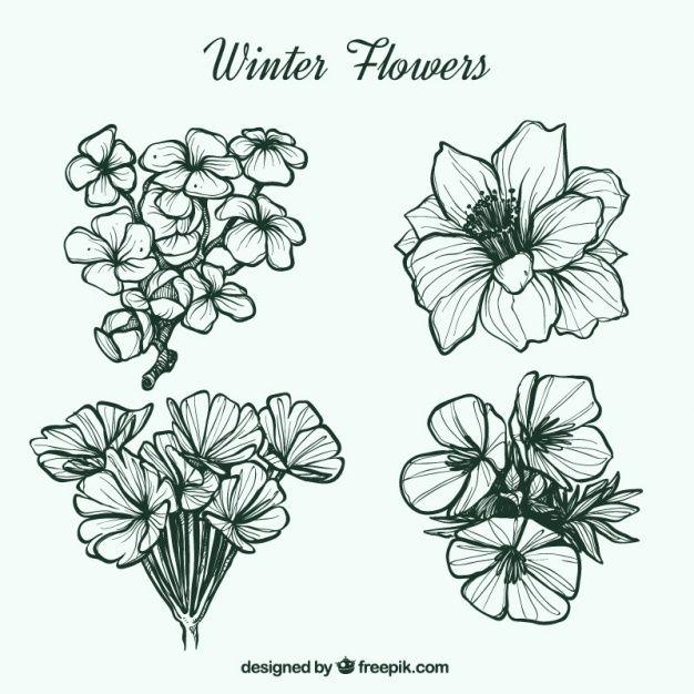 Bonitas flores de invierno dibujadas a mano Vector Gratis ...