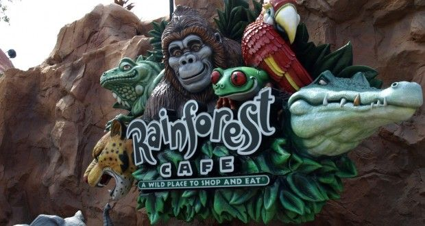 5 Things You Will Love About Rainforest Cafe (Animal Kingdom)