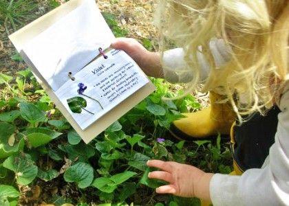 Making A Pocket Herbarium
