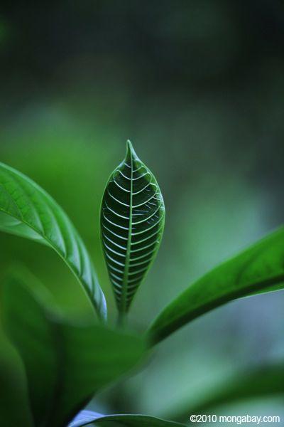 Amazon Rainforest Animals Names Photo Rainforest Plant Leaf
