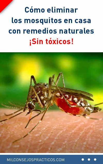 C mo eliminar los mosquitos en casa con remedios naturales for Como eliminar los mosquitos del jardin