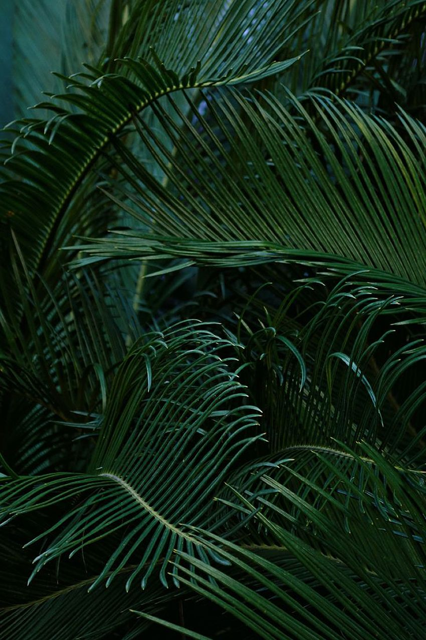 Background palm leaves mono