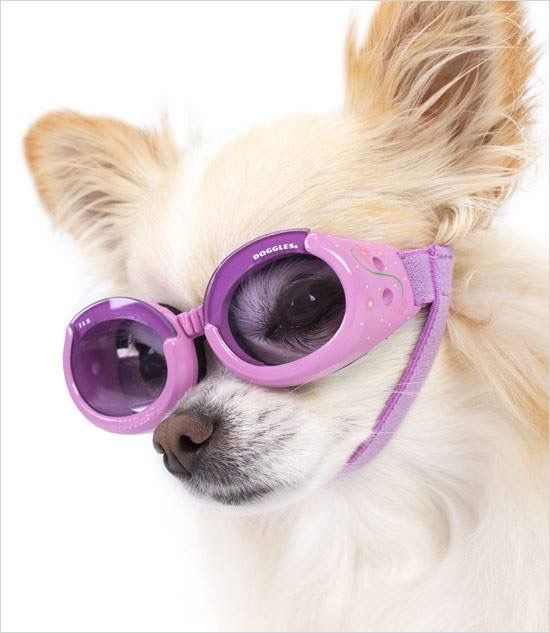Chihuahua Goggles Dog Sunglasses Cat With Blue Eyes Dog Goggles