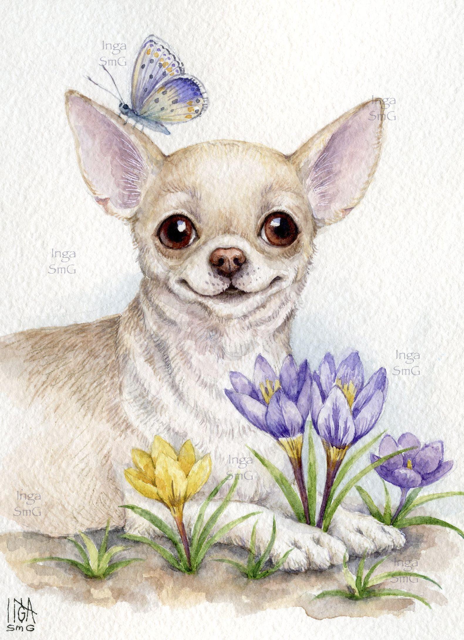 Inga Izmajlova Akvarel Sobaka Shenok Chishka Chihuahua Vesna Ulybka Inga Smg Chihuahua Art Dog Paintings Chihuahua Drawing