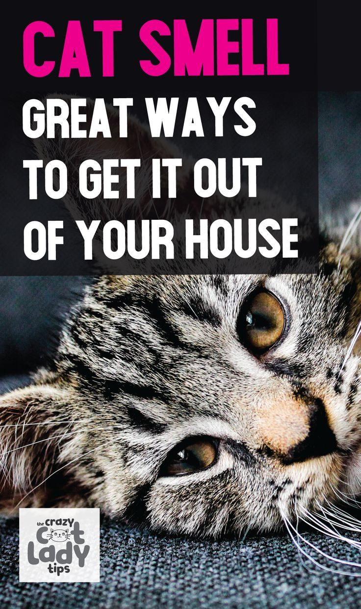 how to get rid of cat litter odour