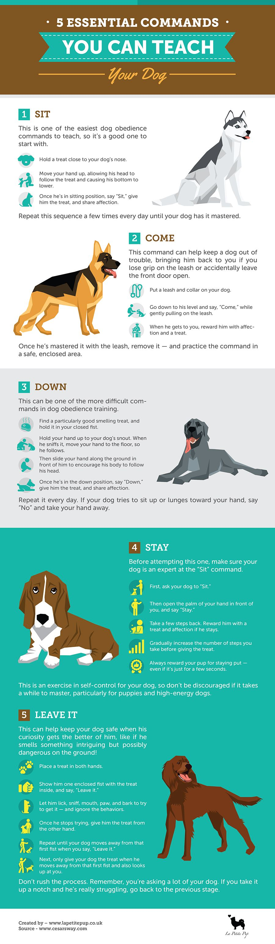 Https Www Lapetitepup Co Uk 5 Essential Commands Can Teach Dog Infographic In This Infographic We Share How To Teach Your Dog Th Dog Training Dog Care Dogs