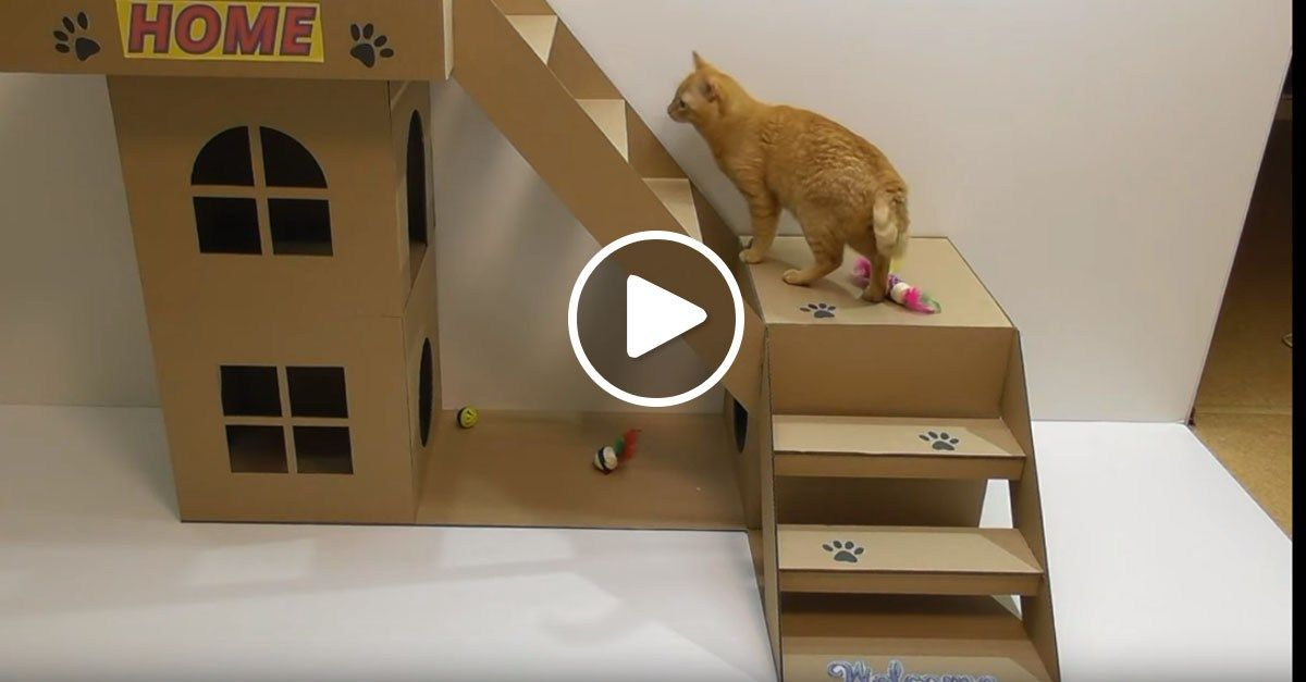 Here S An Ameowzing Step By Step Video Guide On How To Make A House For Your Cat Out Of Cardboard Cat House Diy Cardboard Kitten House Cardboard Cat House