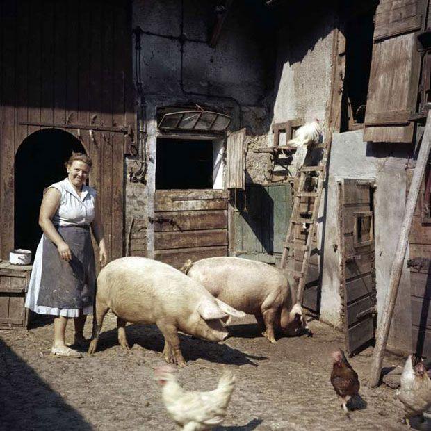 Fotograf J. H. Darchinger: Beuys, Bonn und Brandt   Foto   ZEIT ONLINE