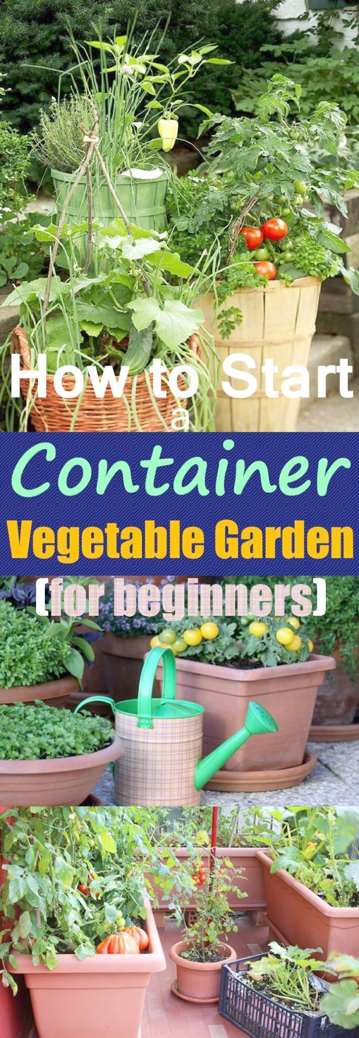 14ca506f0870ea70226f7aa9fcf81e25 - The Vegetable Gardener's Container Bible Pdf