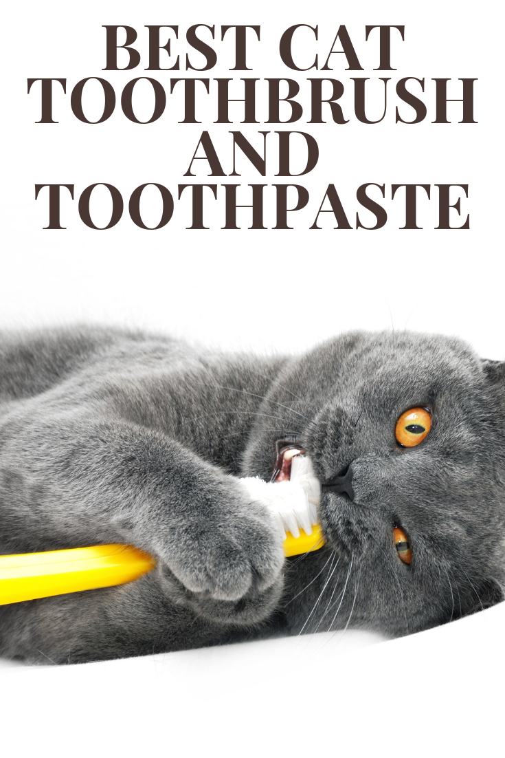Best Cat Toothbrush And Toothpaste Kitty Cats Blog Brushing Teeth Cat Vitamins Cat Dental Health