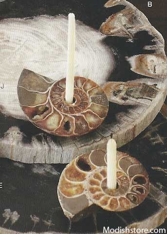 Roost Ammonite Candle Holders, Set/2