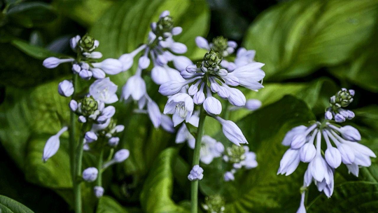 Our 18 Favorite Perennials That Thrive in Shady Gardens #shadeplantsperennial