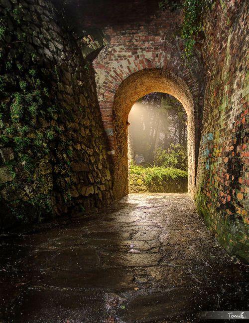 La luz del final del túnel le devolvió la esperanza una bella imagen de lo que había al otro lado.