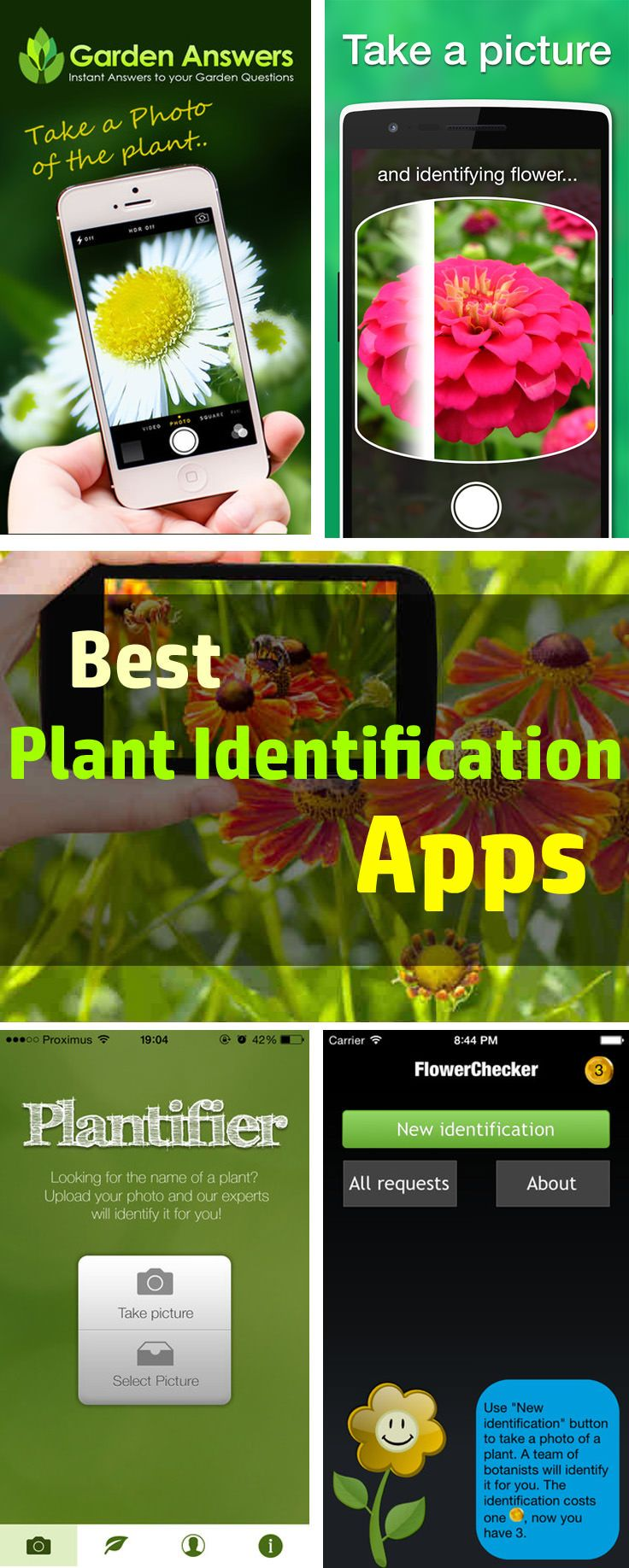 Best Plant Identification Apps for 2020 Identify plant