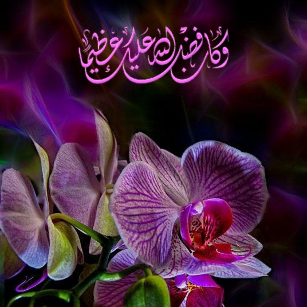 قرآن كريم آية وكان فضل الله عليك عظيما Beautiful Quran Quotes Quran Quotes Quran