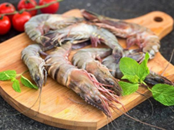 pin on prawn lobster crab fish pin on prawn lobster crab fish