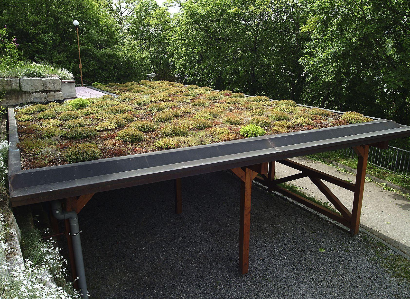 Extensive Dachbegrunung Terasse
