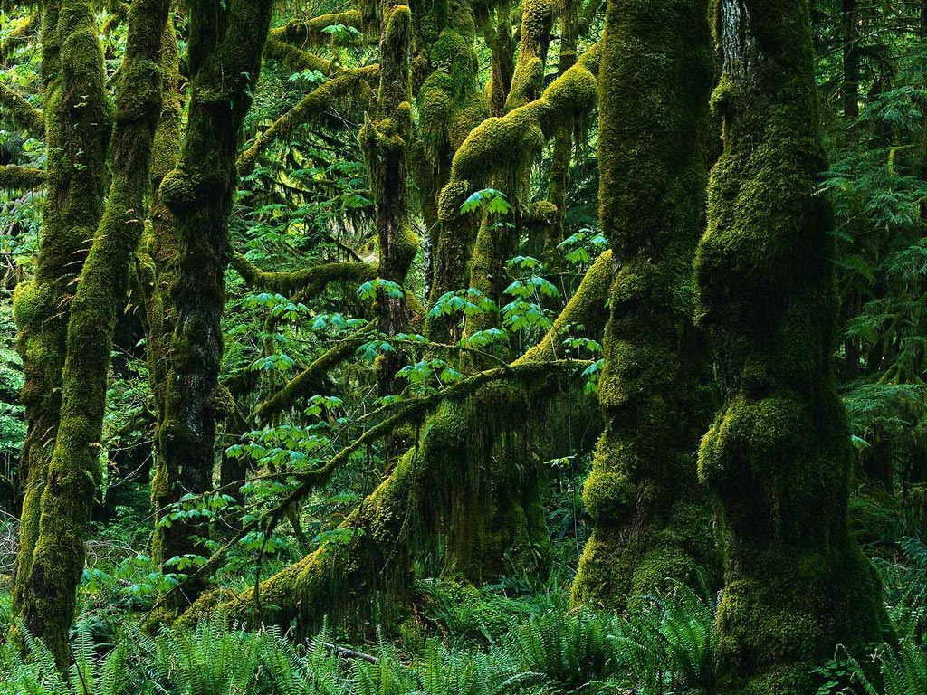 In An Old Forest Covered In Moss Nature Beautiful Forest Forest