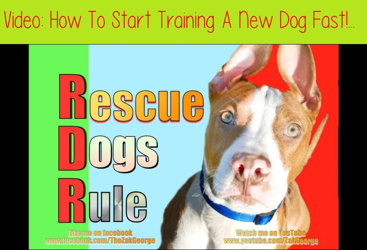 How To Start Training A New Dog Fast I Recently Stopped By A Local