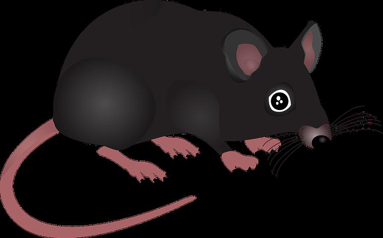 Mouse Home Animal Rodent Pest Small H Gambar Anjing Kartun Tikus