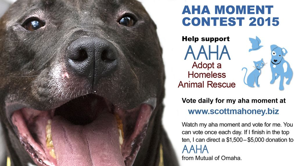 Only six days left make a difference in a homeless animal