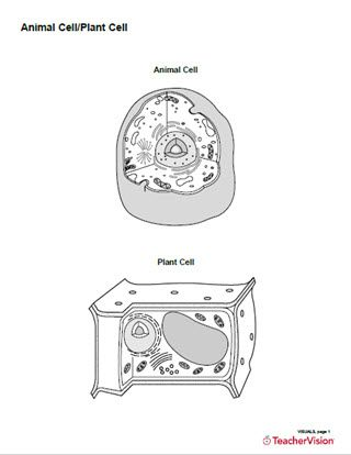Animal Cellplant Cell Structure Diagram Printable Blank