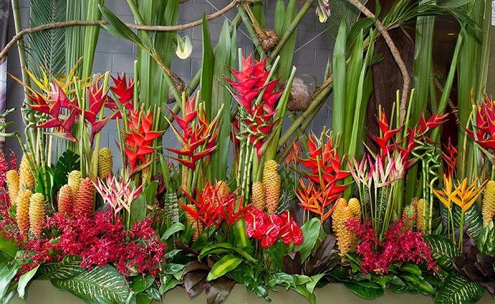 Fnq Blooms Flores