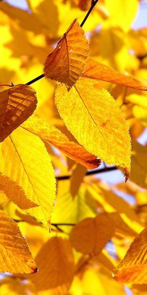 Fall Yellow Aesthetic Yellow Aesthetic Pastel Yellow Wallpaper
