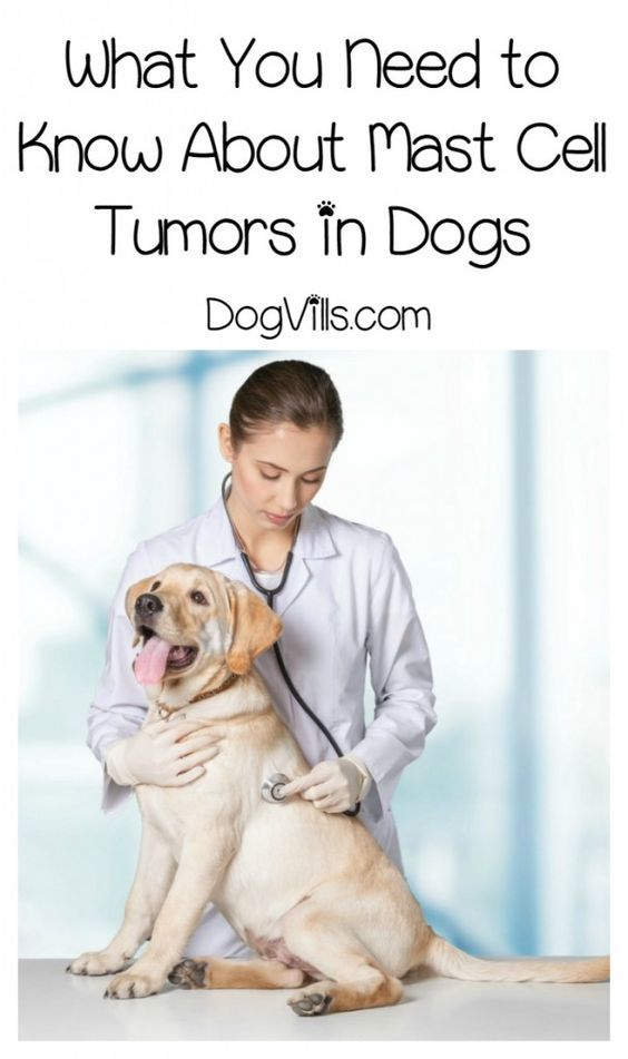 Mast Cell Tumors Everything You Need To Know Mast Cell Tumor Dogs Dog Cancer Tumors On Dogs