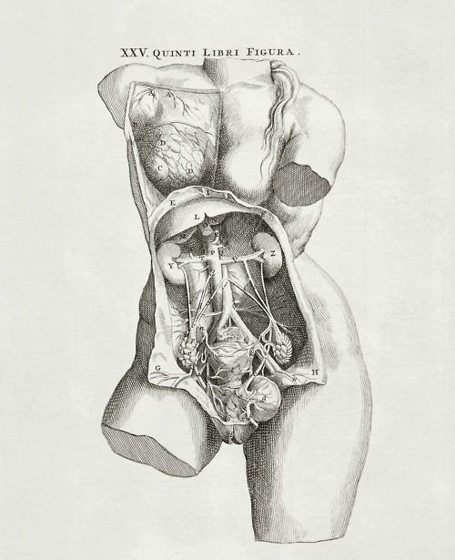 The Female Pelvic Anatomy From De Corporis Humani Fabrica By Andreas