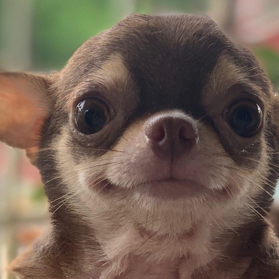 Coco The Happy Doggo On Instagram Hello Cocothehappydoggo