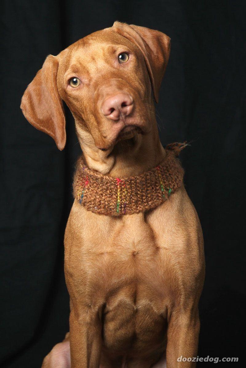 Mamou, tu peux te mettre au tricot pour chien ;-) un beau collier pour Urasse !