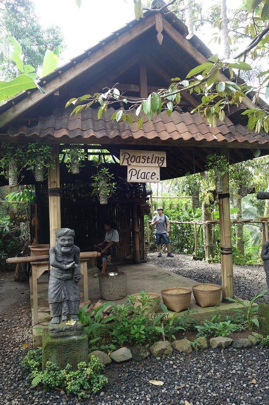 Kopi Luwak Tasting at Alas Harum Agro Tourism Luwak
