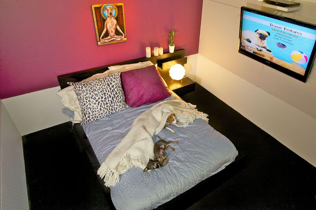 Http Chelsea Dpethotels Com Dog Hotel Pet Hotel Luxury Dog Kennels