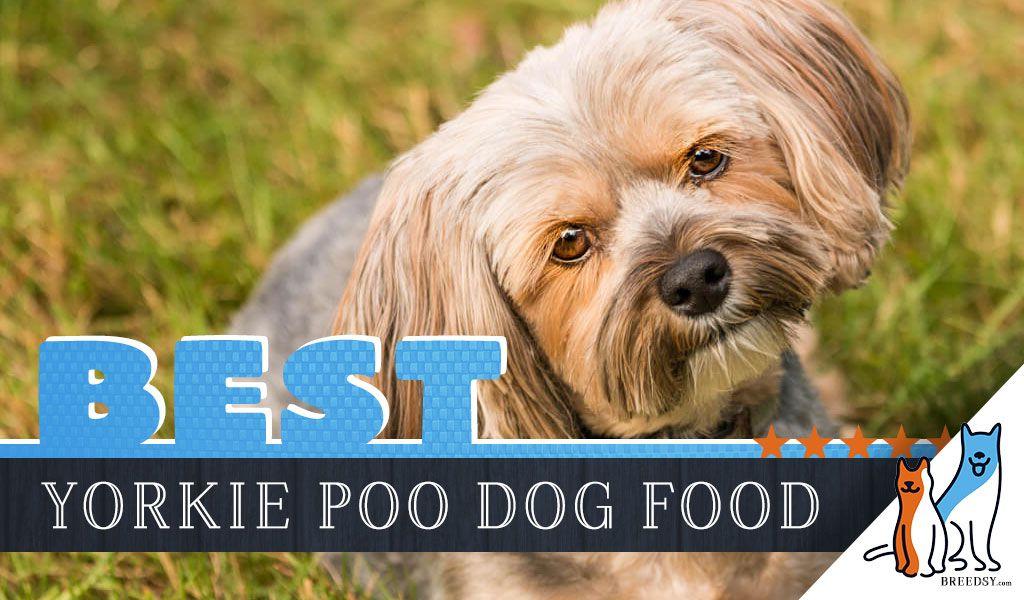 6 Best Yorkie Poo Dog Foods Plus Top Brands For Puppies Seniors In 2020 Yorkie Poo Yorkie Poo Puppies Yorkie