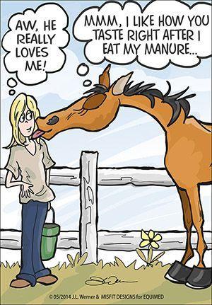 Horse jokes - photo#45