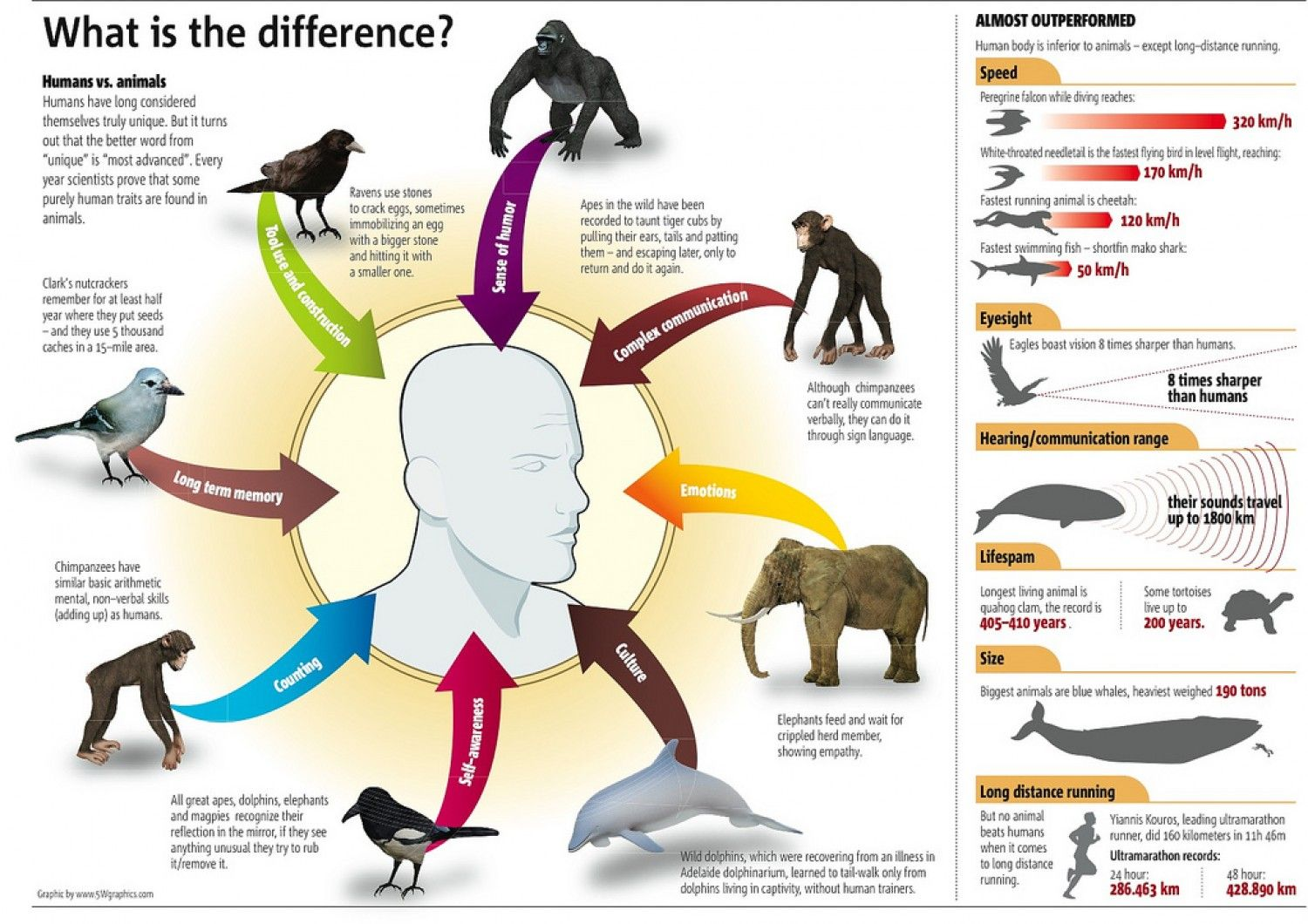 communicaton between animals and humans • categorized under animals,nature | difference between animals and humans animals cannot talk or communicate with each other in some species that the skills have been found these are humans on the other hand are the only known species with highly developed communication skills.