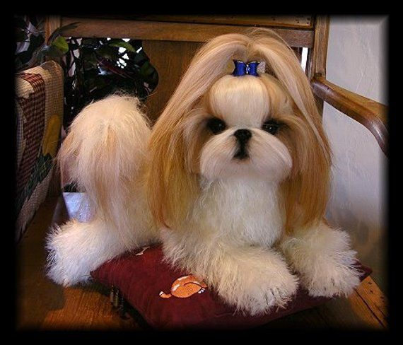 This Listing Is For A Custom Made Life Like Soft Sculpture Of Your Dog Pictures Shown Are Examples Of My Work I Ca Shih Tzu Puppy Shih Tzu Grooming Shih Tzu