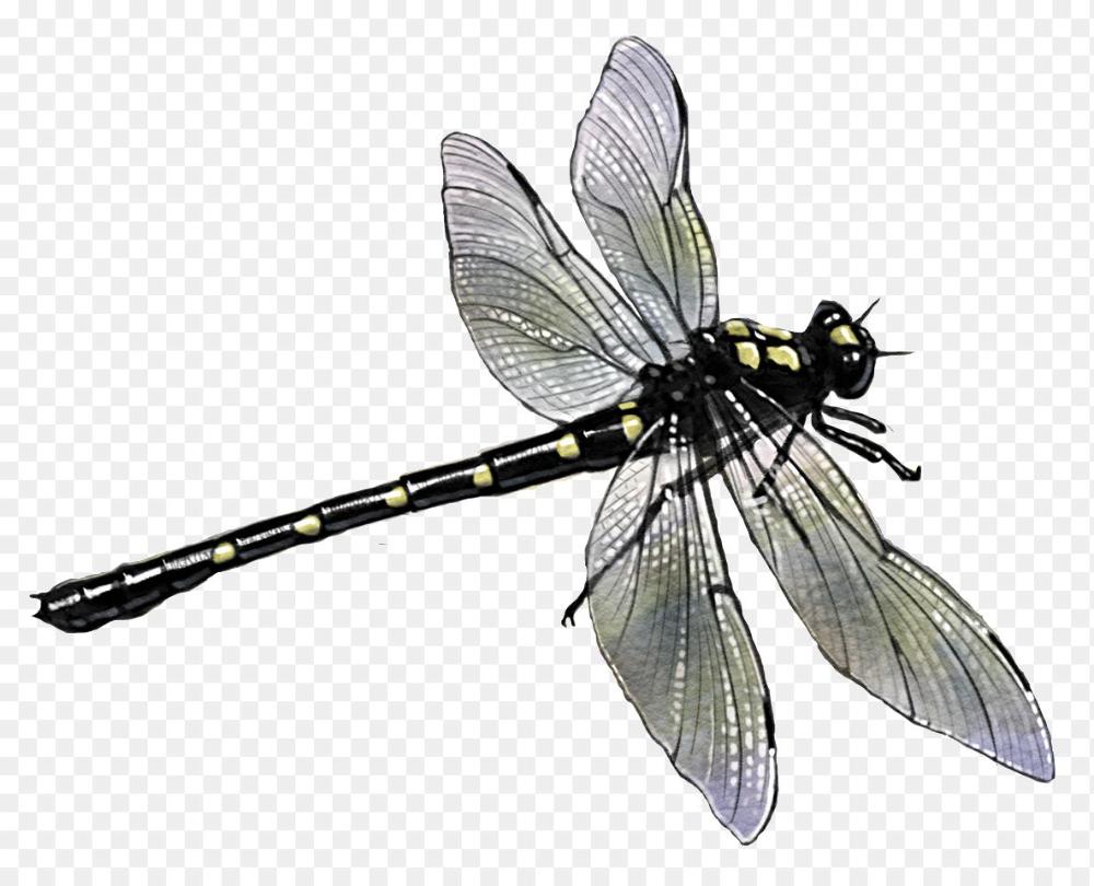 Dragonfly Png Potton Burton Up The River Potton Burton 1185 960 Png Download Free Transparent Background Dragonfly Png Pn Dragonfly Png Dragonfly Clipart