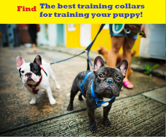 Check out all of the dog training gear that we know will