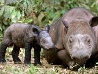 Le 100 specie più a rischio di estinzione