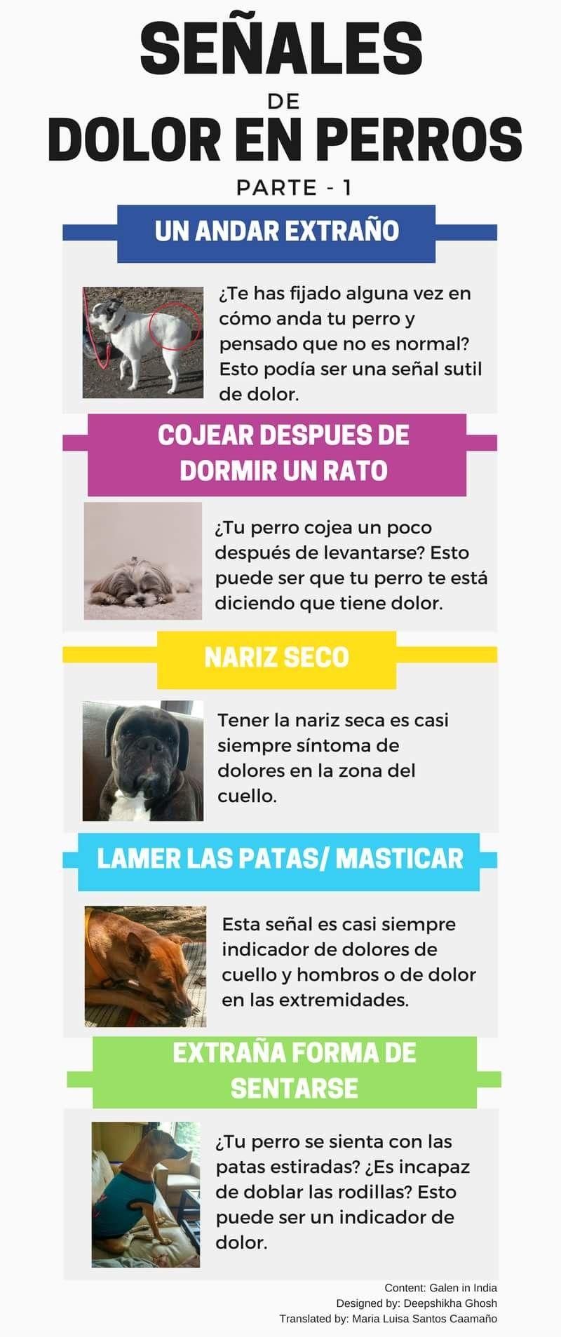 Dato interesante | Anatomía animal | Pinterest | Datos interesantes ...