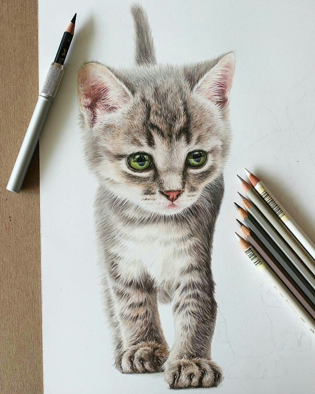 Resultado De Imagen Para Dibujos A Lapiz Color Animales Prismacolor Art Pencil Art Drawings Realistic Art