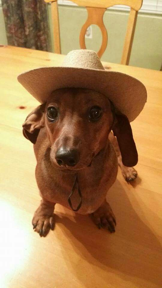 Pin By Trucy Baker On I Love Doxies Funny Dachshund Dog Names