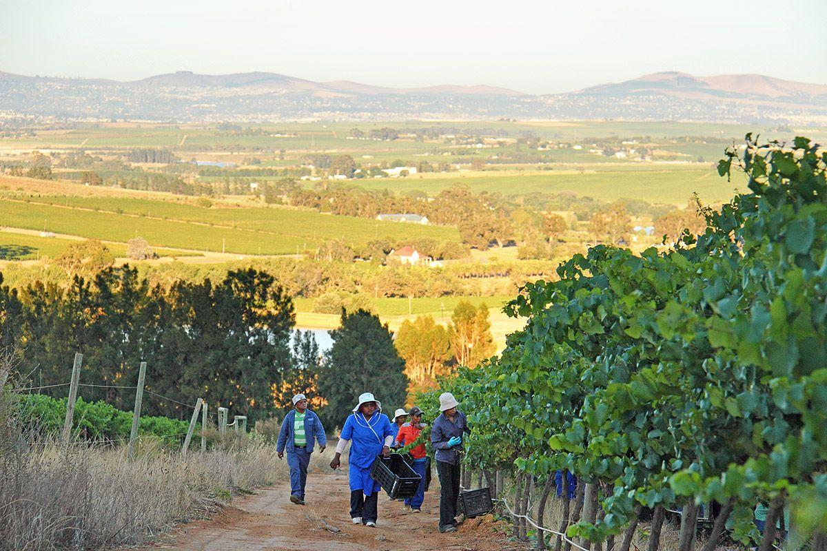 #Stellenbosch #View
